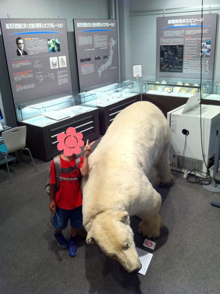 北海道大学総合博物館 シロクマの剥製