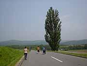 美瑛 ケンとメリーの木